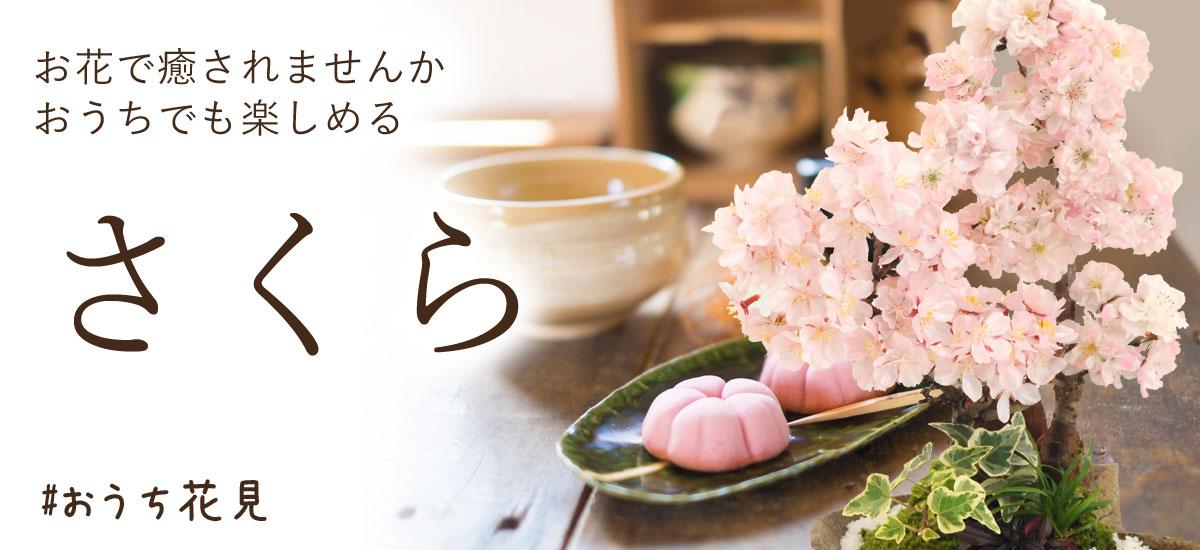 seijin_bn1200x550.jpg