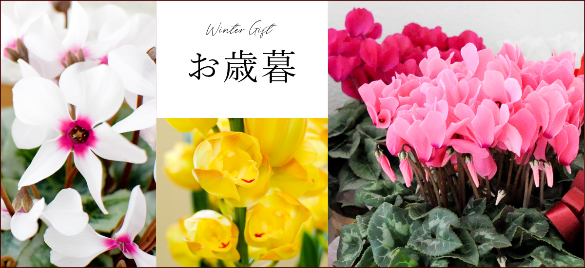 2020 冬の花贈り~ウィンターギフト